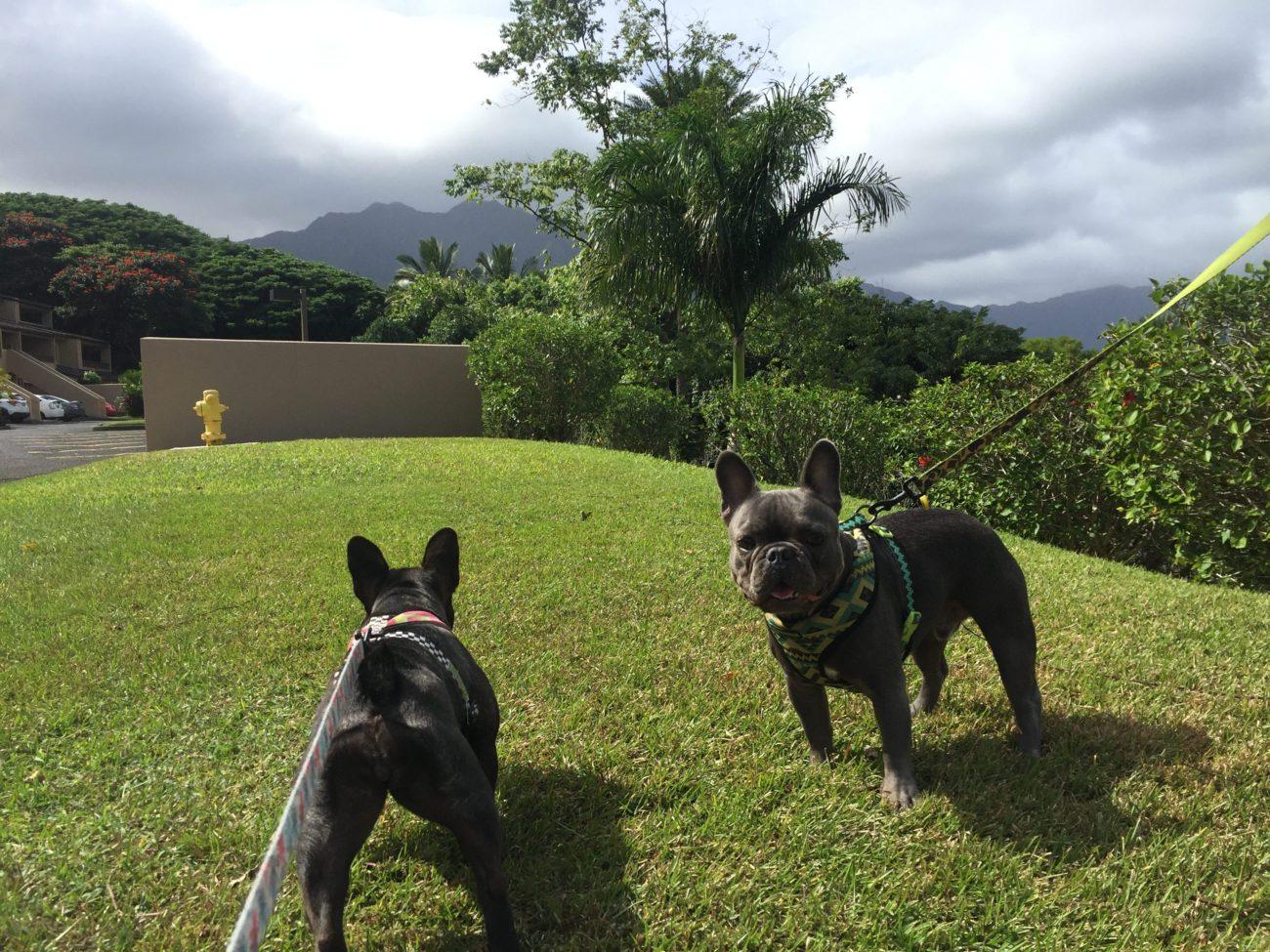 ハワイ散歩