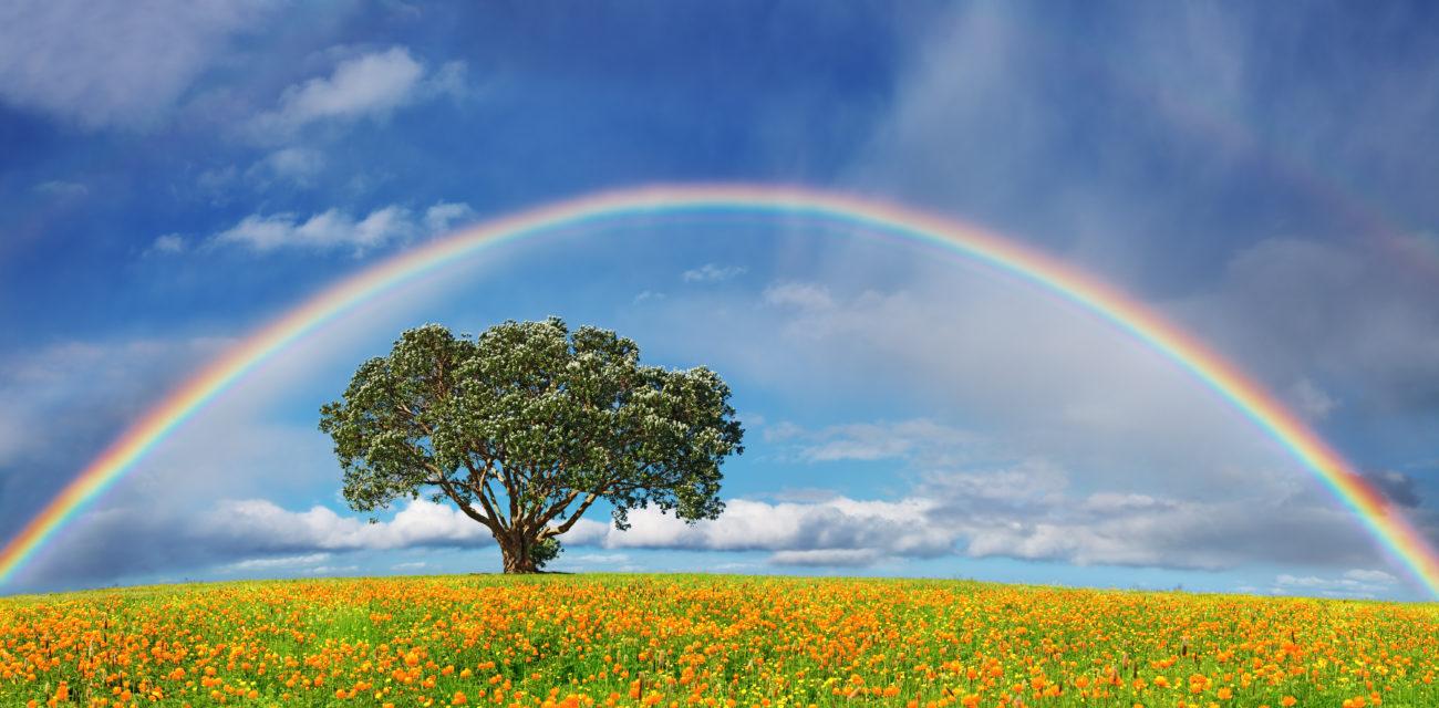 「写真  虹」の画像検索結果