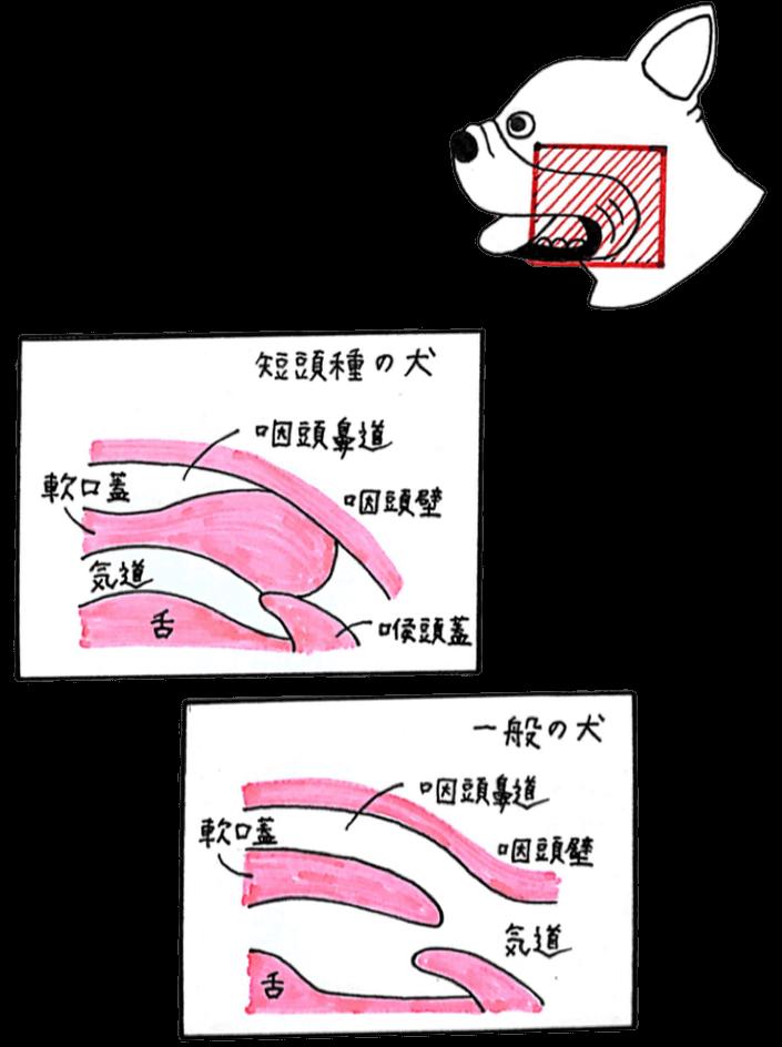 軟口蓋症状