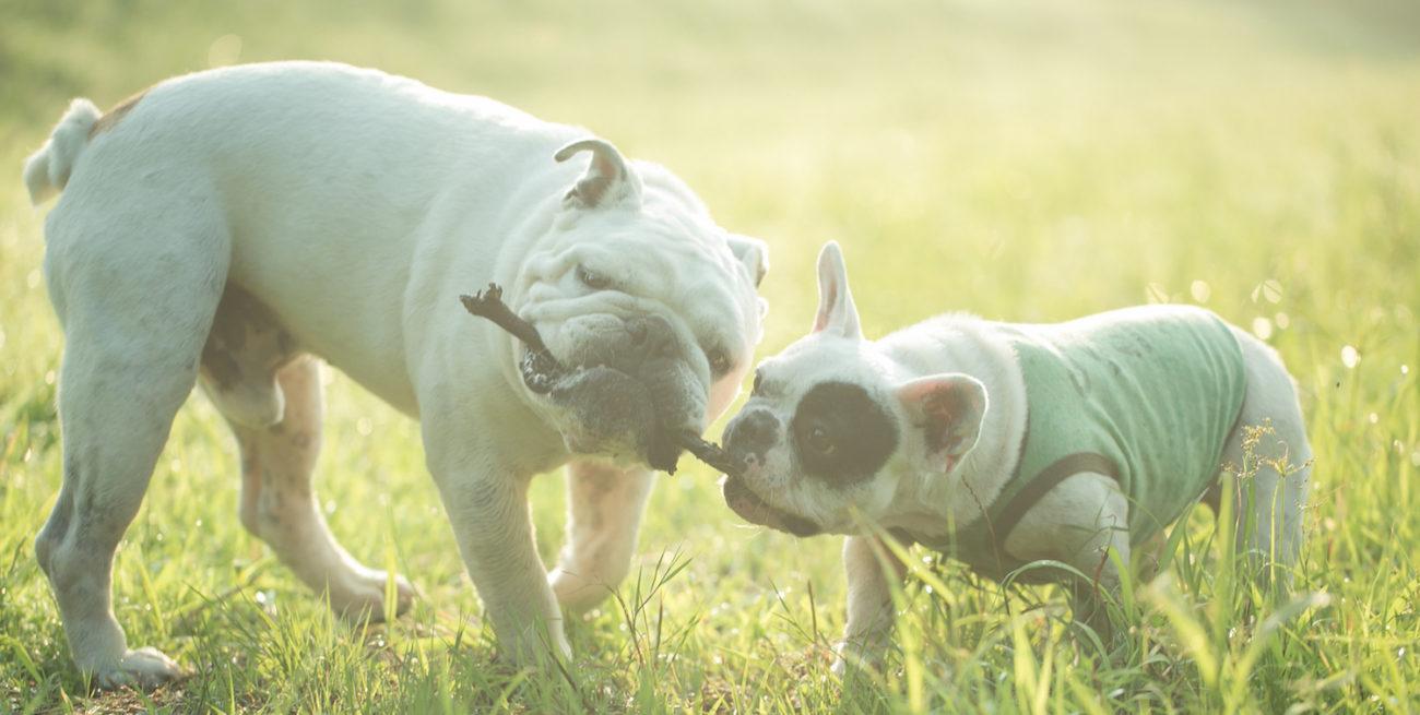 French Bulldog Life公式オンラインストア