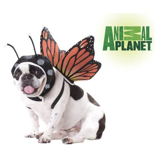 アニマルプラネット Butterfly Pet コスチューム