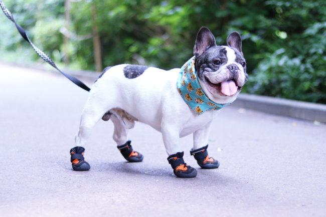 フレンチブルドッグ靴
