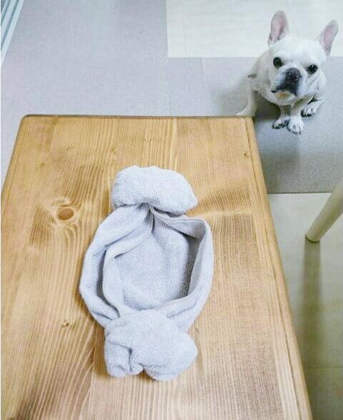 フレンチブルドッグ羊巻き