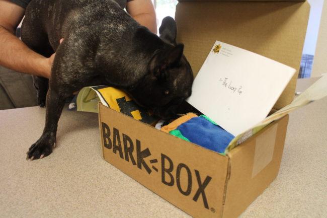 フレンチブルドッグBarkBox