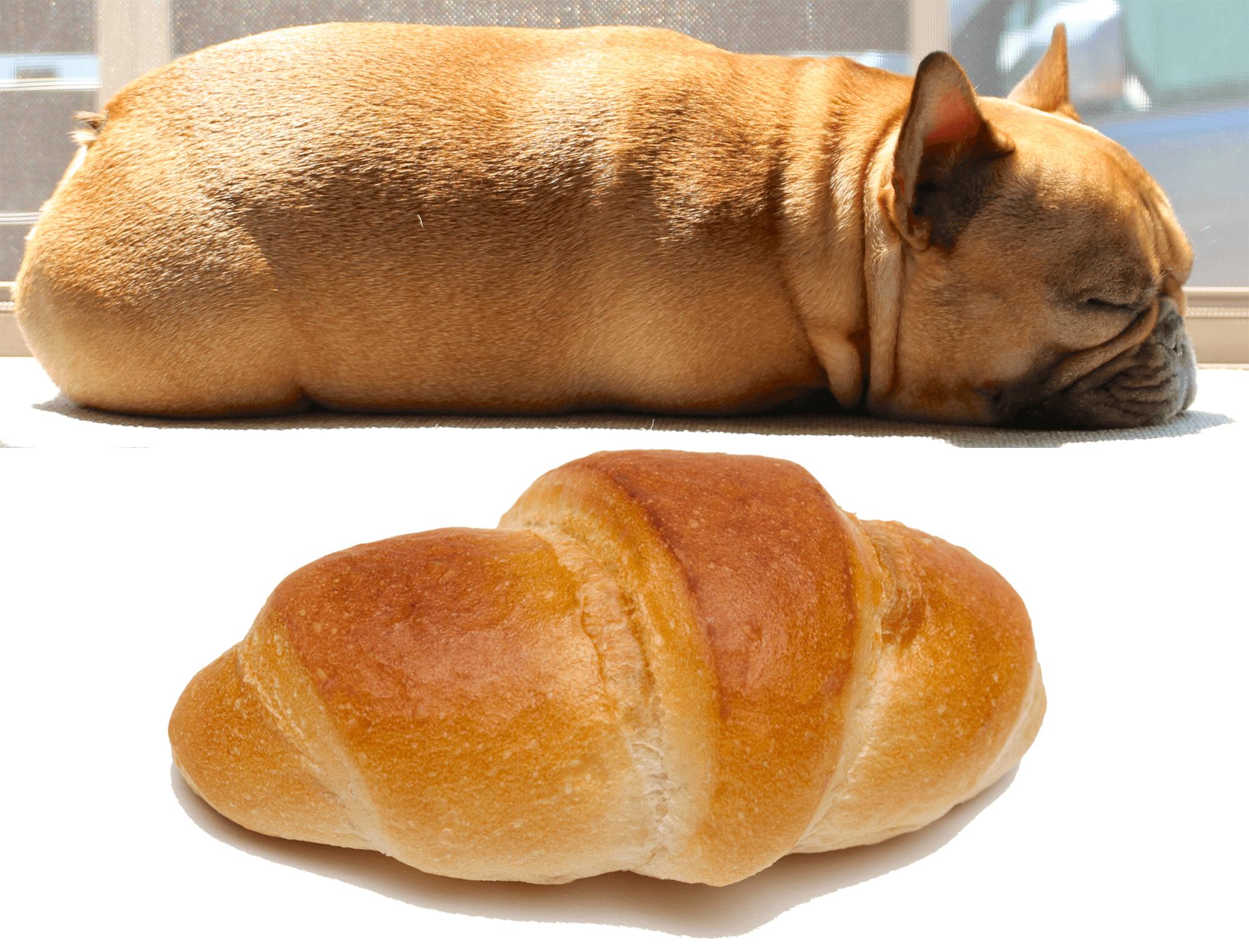 フレンチブルドッグパン