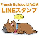 【LINEスタンプついに完成!】French Bulldog Life(フレンチブルドッグライフ)