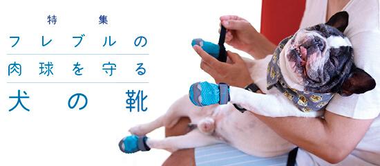 フレブルの肉球を守る「犬の靴」