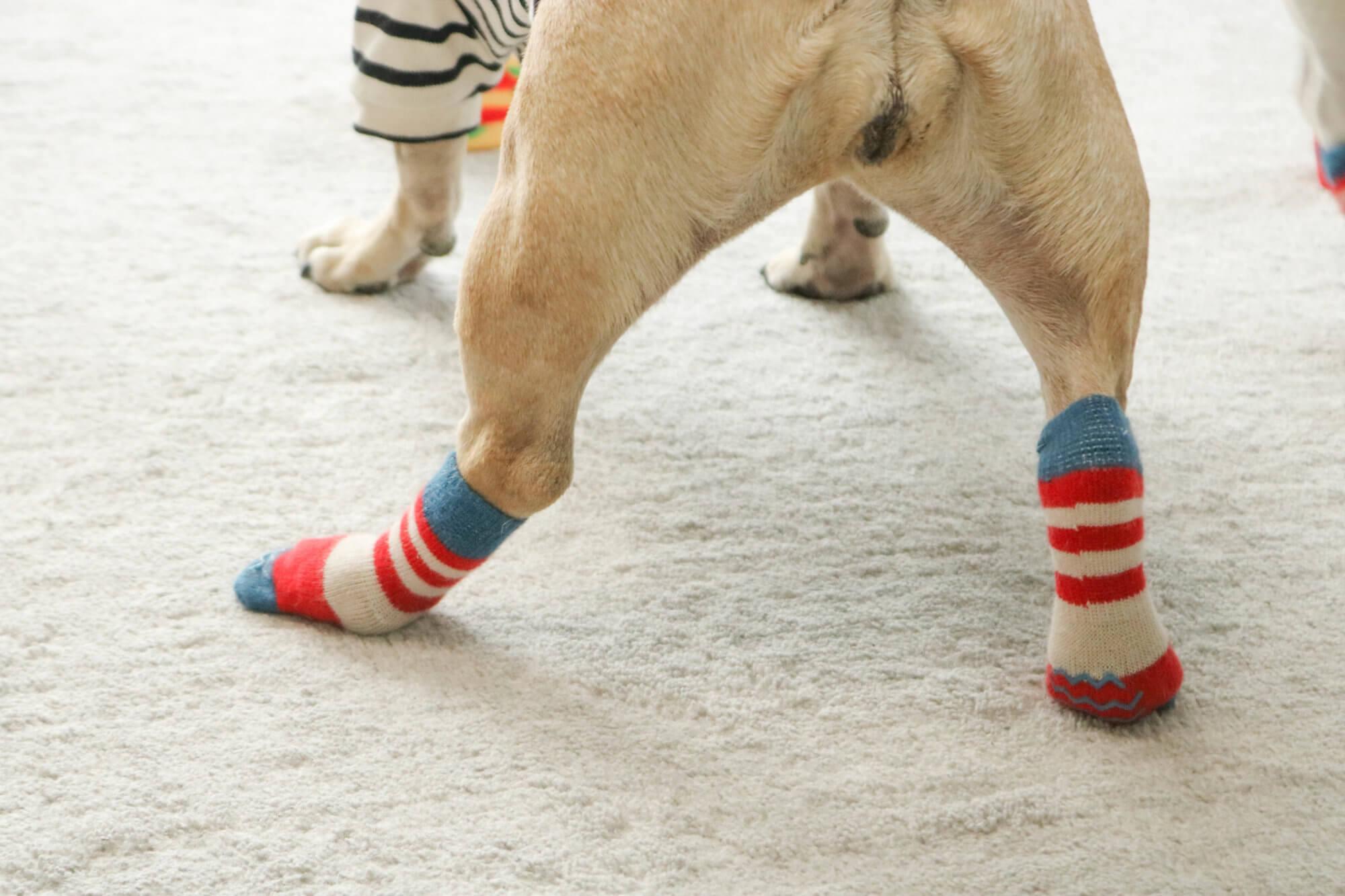 フレンチブルドッグ犬の靴下