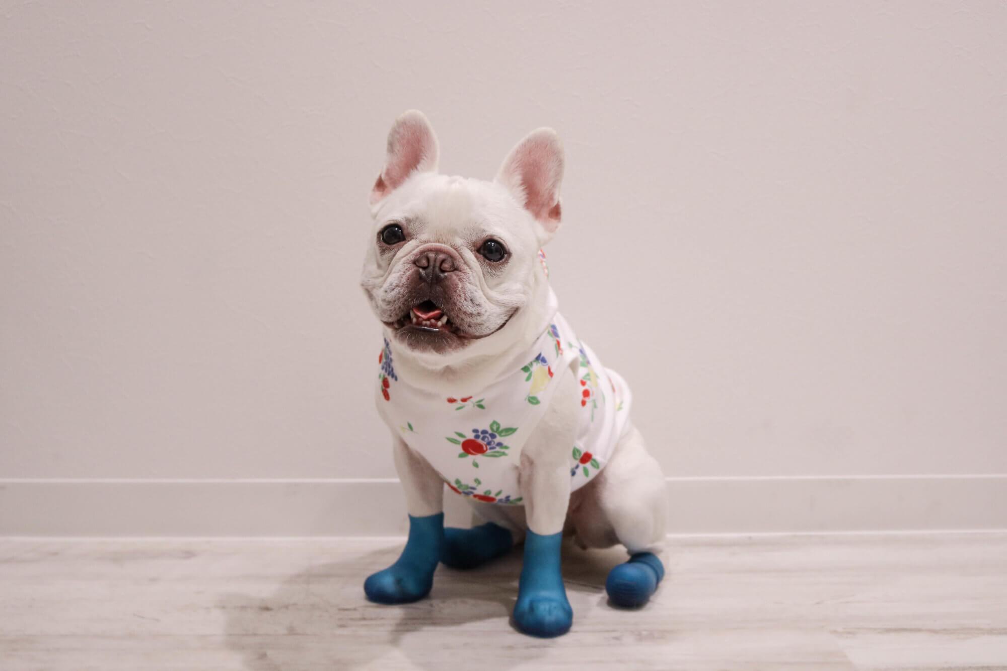 フレンチブルドッグ靴,靴下