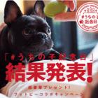 【結果発表】愛ブヒの「うちの子記念日」を教えて!フォトビーコラボキャンペーン
