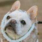 長生きの秘訣は先祖の犬が教えてくれる。自然の中の健康法を取り入れたフード「ワンフー」