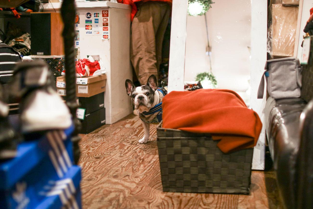 フレンチブルドッグ,看板犬,高円寺