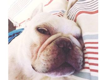フレブル、寝顔ホラー