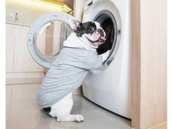 フレブル,お洗濯