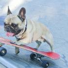 【海外取材】イギリス在住、スケートボードを乗りこなす超有名なフレブルを直撃!
