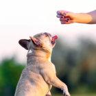 【特集】わたしは、愛ブヒのリーダーになるのダ。