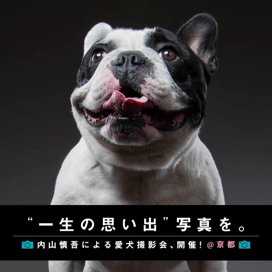 フレンチブルドッグ,内山慎吾