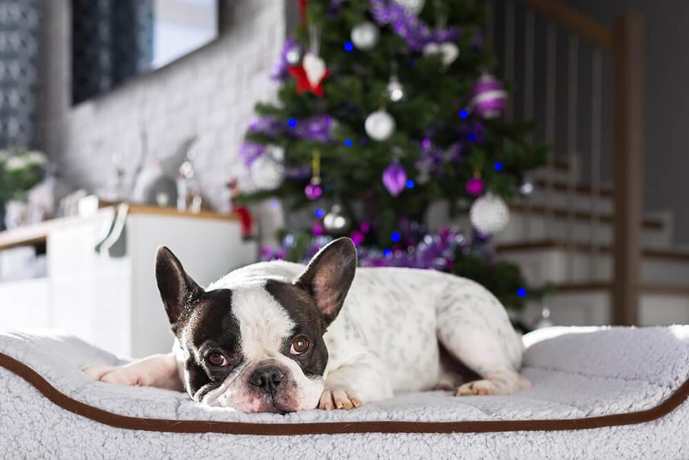 フレブル,クリスマス,ギフト