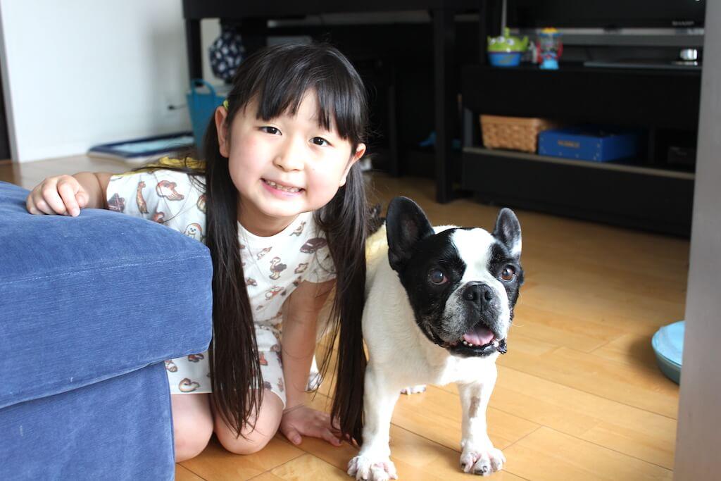 フレンチブルドッグと女の子