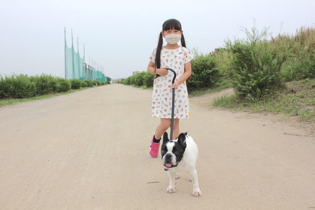 フレンチブルドッグと散歩