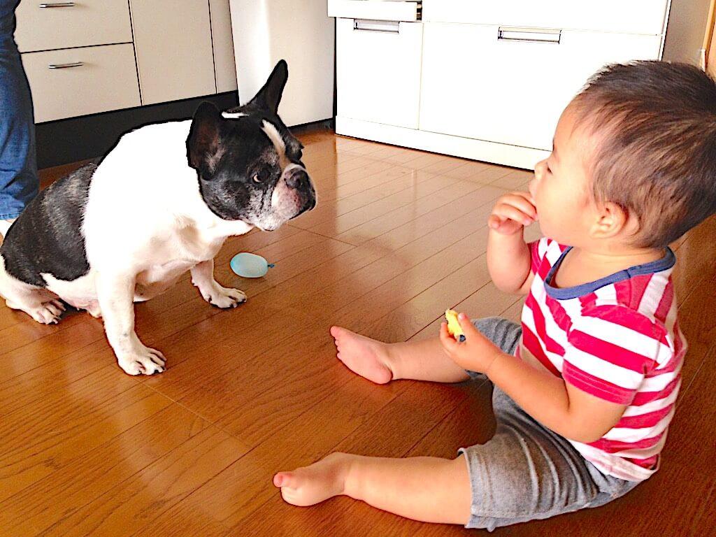 フレンチブルドッグと赤ちゃん