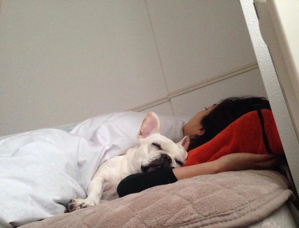 フレンチブルドッグと寝るオーナー