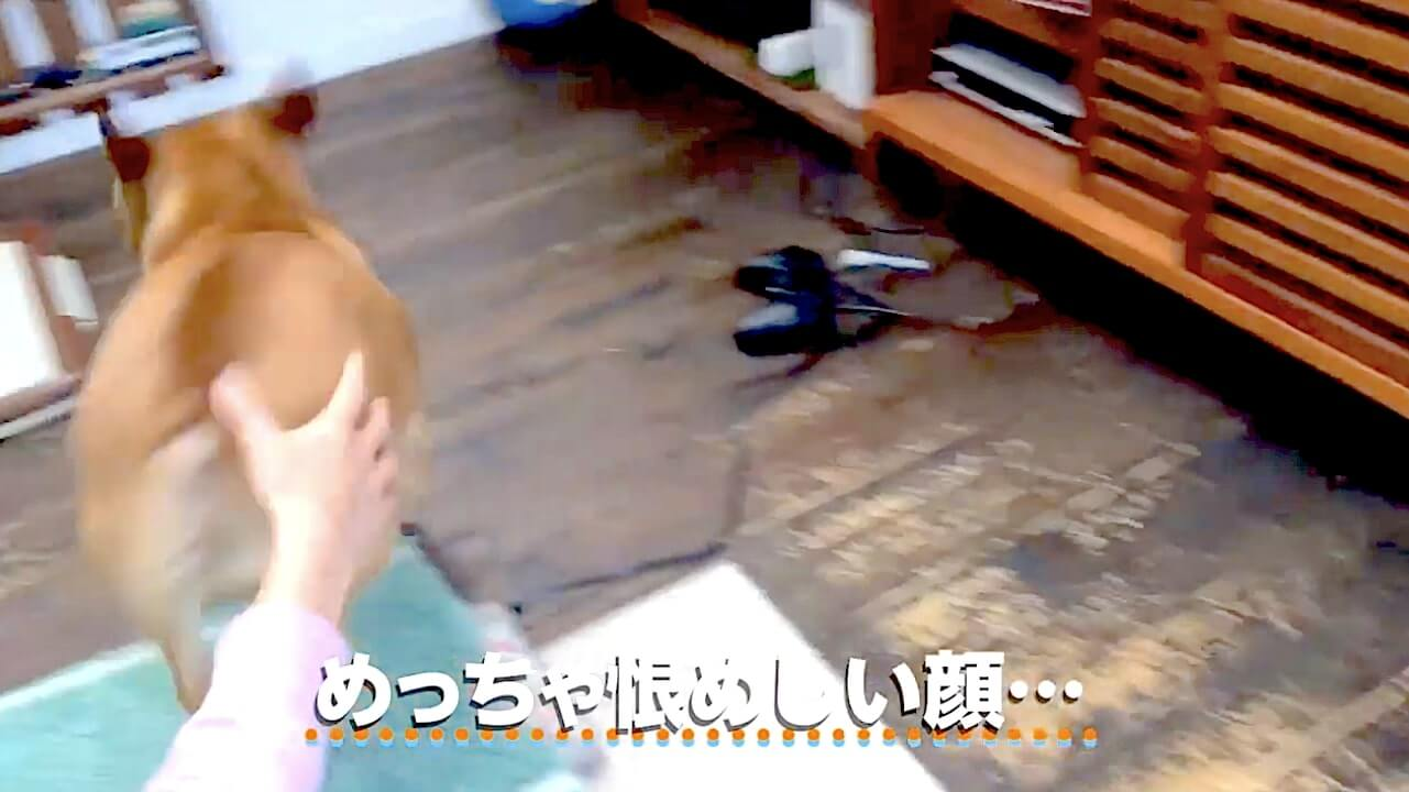 フレブル,動画,イッヌドットライフ