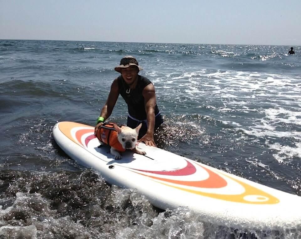 サーフボードに乗るフレンチブルドッグ