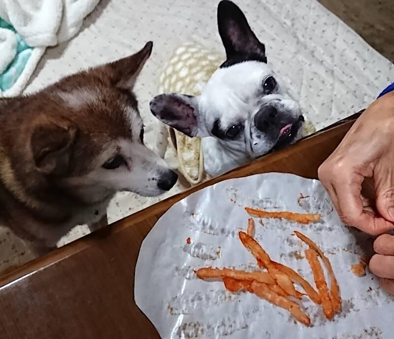 フレンチブルドッグとミックス犬