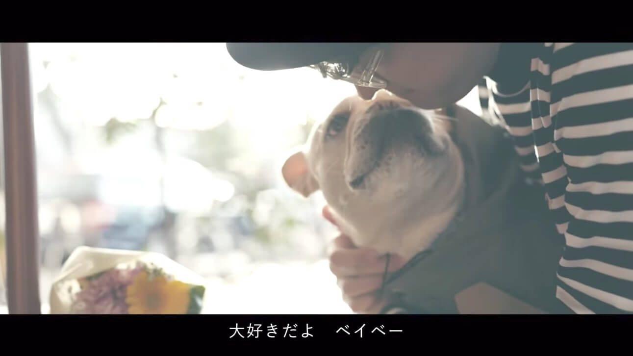 フレブル,YouTube,MV