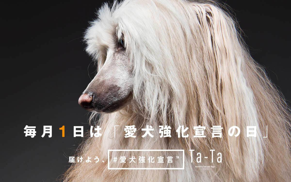 犬,愛犬強化宣言,コラーゲン